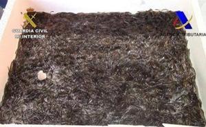 Interceptan en Barajas 113 kilos de angulas rumbo a China y las liberan en un río