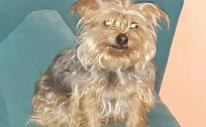 Aparece la perra desaparecida en Sama