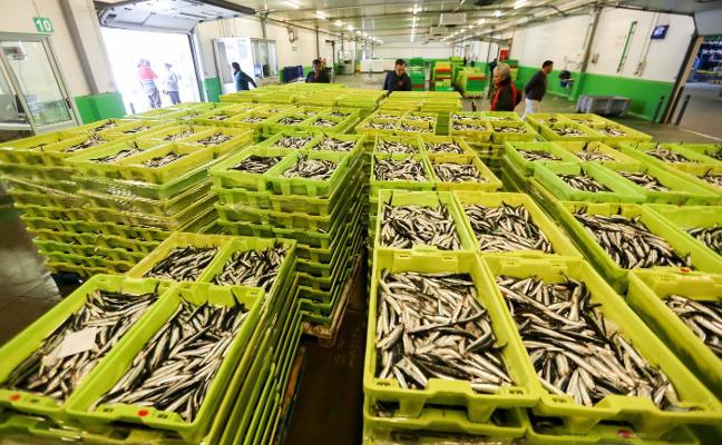 La costera del bocarte se adelanta con 22.000 kilos subastados ayer en la rula