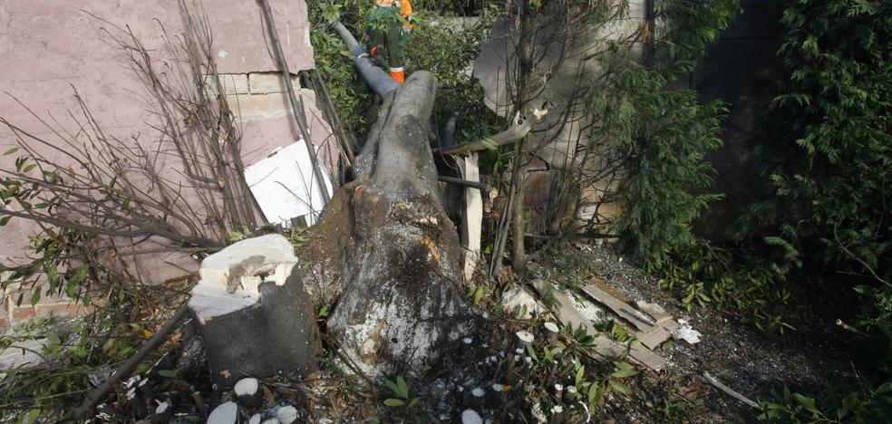 Condenan al Consistorio por los daños que causó la caída de un árbol a un muro