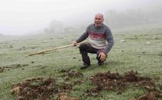 El pastoreo arranca con críticas de los ganaderos por los daños del jabalí