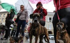 Tres concejos más se suman a la perrera