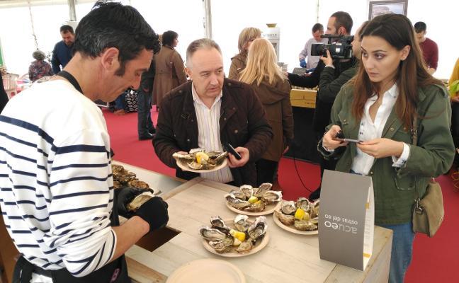 Las ostras del Festival de Castropol tienen todas las garantías de consumo