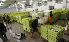 La pesca descargada en El Musel bajó un 69,5% de enero a marzo