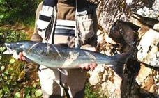 ¿Salmones pescados con red en los ríos asturianos?