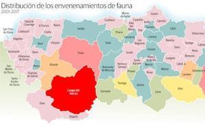 Los perros, principales víctimas del veneno en los montes asturianos