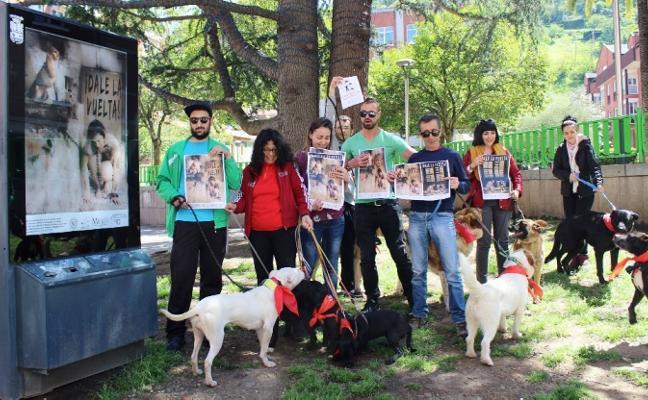 Mieres inicia una campaña contra el abandono animal