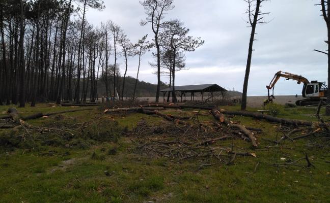 Navia comienza a talar los más de doscientos pinos del entorno de La Poza