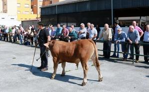 Aller presume de ganaderías en su certamen local, con 150 reses