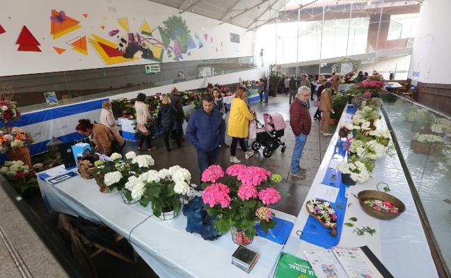 Las hortensias florecen en Avilés