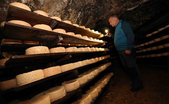 Los elaboradores del queso Cabrales se quedan sin espacio en las cuevas