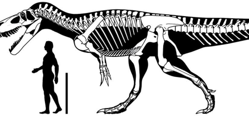 Torvosaurus-kmgE-U60269453382E9E-824x385@El%20Comercio.jpg
