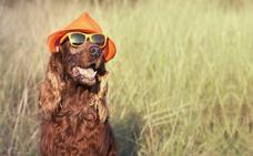 Parques para perros en Asturias