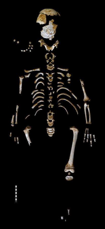 El niño del Sidrón y cómo crecían los neandertales