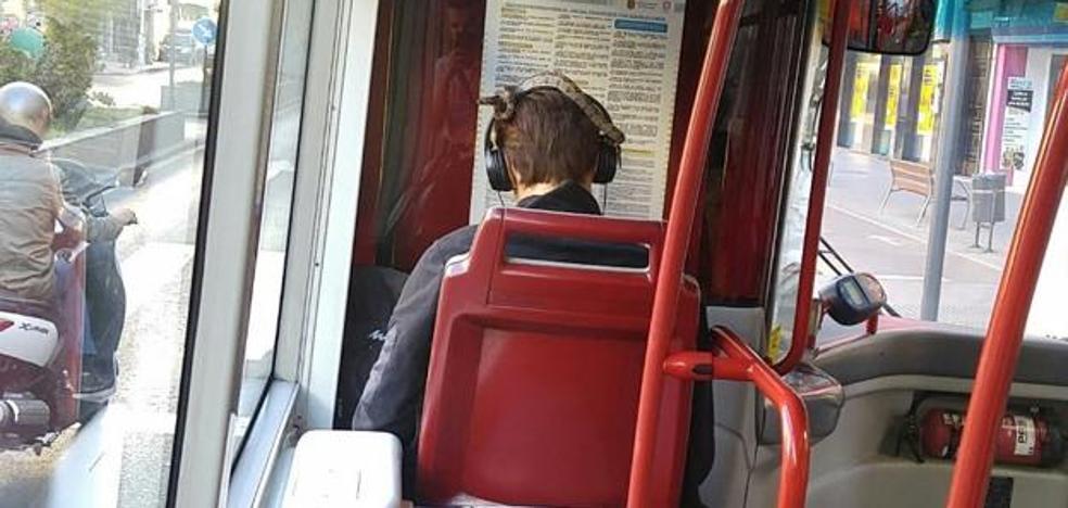 Twitter | Viaja en un autobús urbano de Granada con una serpiente en la cabeza