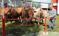 La ganadería y la huerta toman Gijón