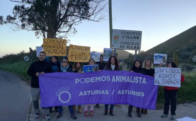 Los ecologistas protestan contra las batidas de lobos