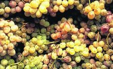 De temporada: uva