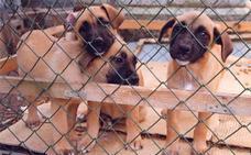La Junta defiende el 'sacrificio cero' de mascotas abandonadas