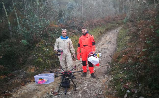 Diseñan un dron que dispara proyectiles con insecticida contra la avispa asiática