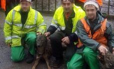 Los ecologistas denuncian ante Fiscalía la caza de dos lobos en una batida de jabalí