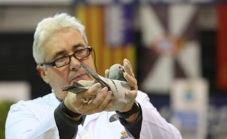 Las palomas mensajeras llenan El Quirinal