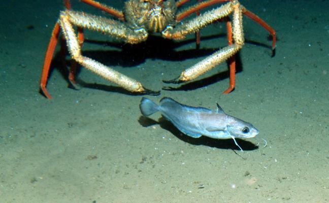 Treinta años de investigaciones submarinas
