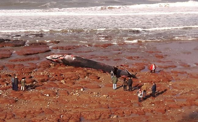 Una ballena de 18 metros en Caravia