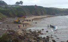 Trocean la ballena varada en Caravia para retirar el cadáver