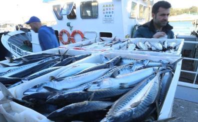 90.000 kilos de xarda en la primera jornada de la costera