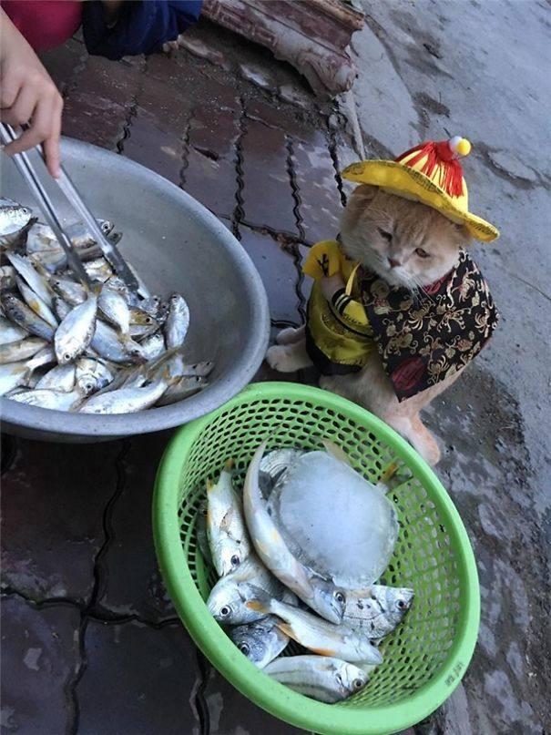 Dog, el pescadero más adorable de Vietnam