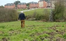 Los jabalíes campan a sus anchas por las huertas y fincas privadas de Olivares