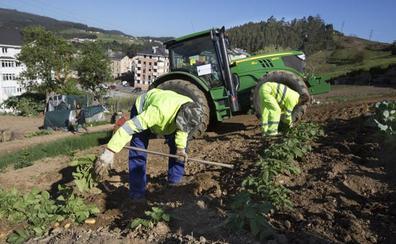El Principado descarta prohibir la siembra de patatas en toda Asturias