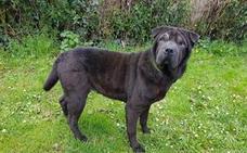 Encuentran a Luz, la perra perdida desde el 5 de abril en Montecerrao