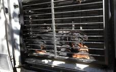 La mujer atacada por dos rottweiler, grave tras ocho horas en el quirófano