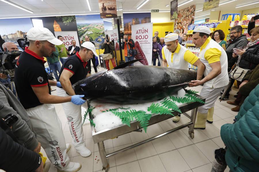Un atún rojo de 284 kilos, despiezado en Gijón