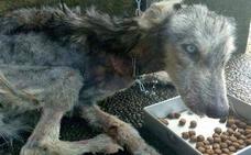 La impresionante recuperación de una perra abandonada permitió reconocer su verdadera raza