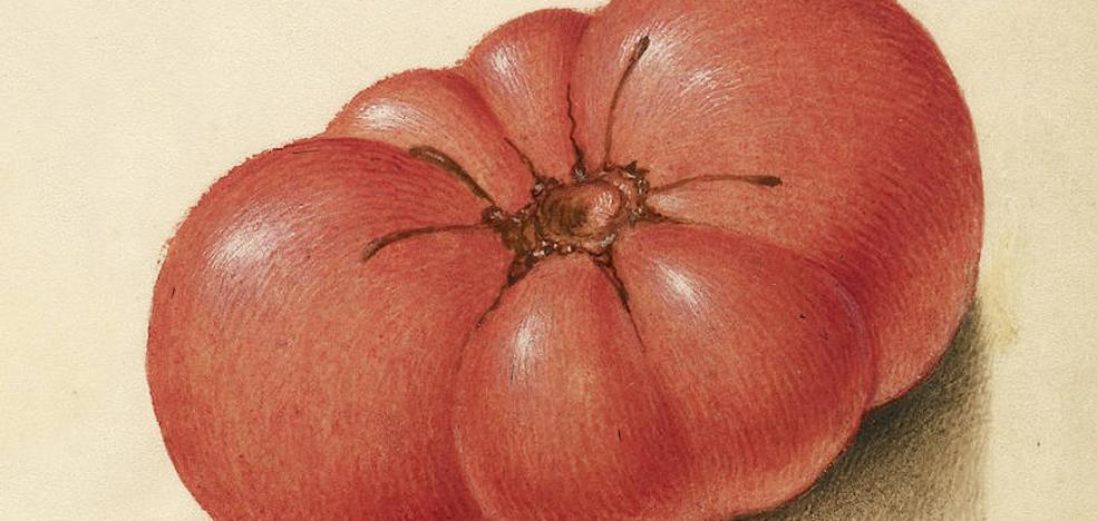 La sabrosa historia del tomate