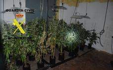 La Guardia Civil desmantela un cultivo interior de marihuana en Olloniego