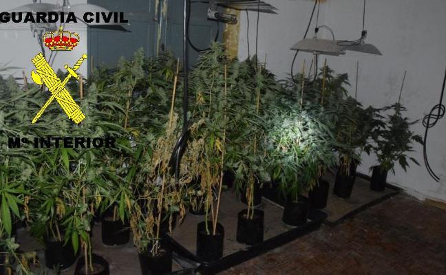 La Guardia Civil desmantela una plantación ilegal de marihuana en Olloniego