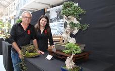 Candás acoge una muestra de bonsáis en la nave de Ortiz