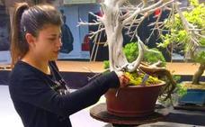 La naturaleza y arte de los bonsáis tiene su sede en Candás