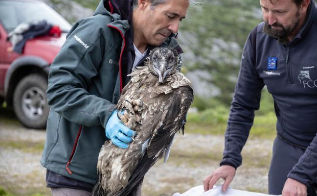'Santander' se une a sus congéneres en Picos de Europa