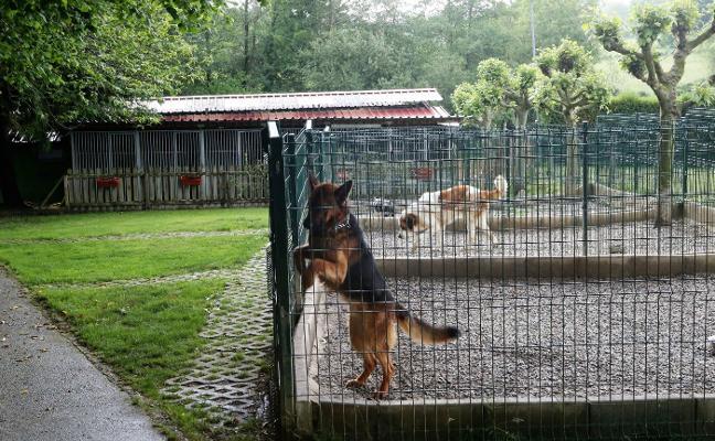 La Ería vuelve a concurrir en solitario a la gestión del servicio de recogida de animales de Siero