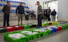 El primer bonito de la temporada alcanza los 16,97 euros el kilo en Gijón