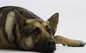 Abandona a dos perros encadenados en Lada y a un cachorro encerrado en una casa