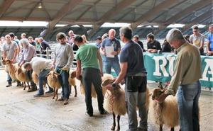 'Taxugu' de Ricardo García Rama gana el concurso de ganado ovino de Siero