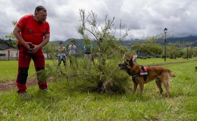La unidad canina busca veneno en Ribadesella