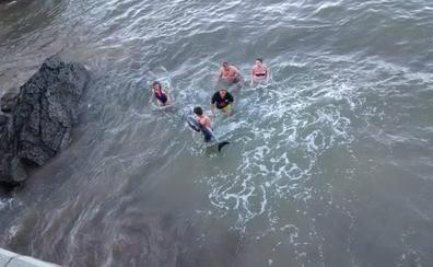 Muere un delfín que apareció varado en Candás