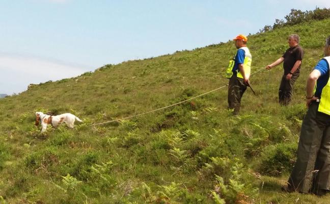 «En Asturias están los mejores perros de España», dicen los cazadores
